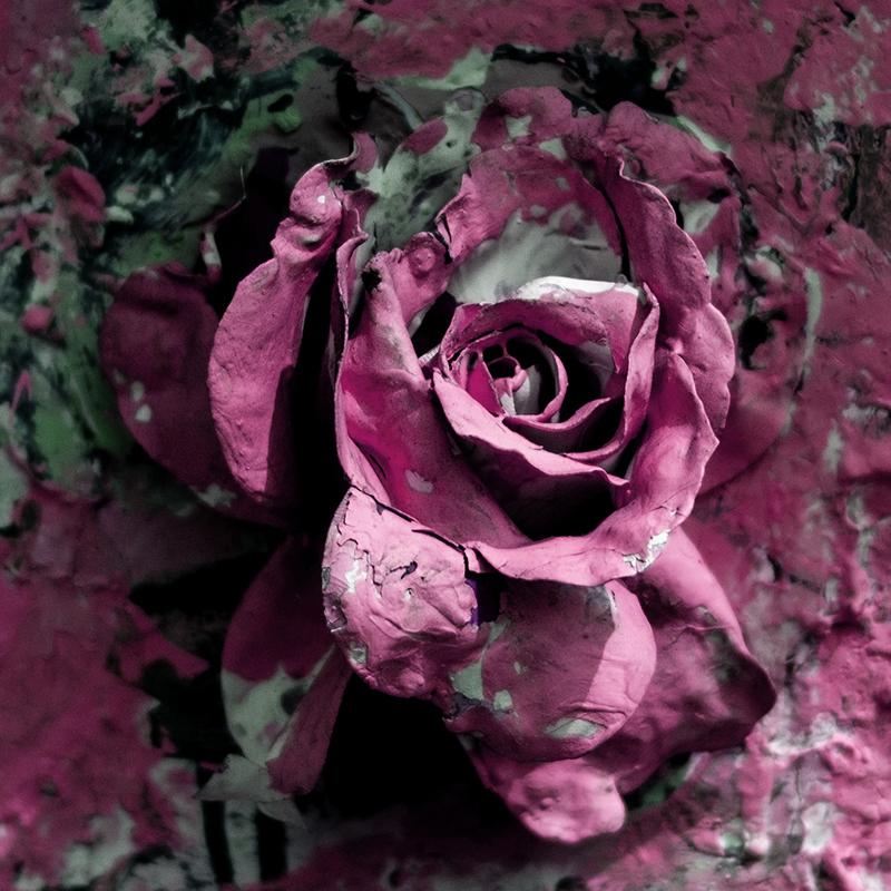 artistic rose picture