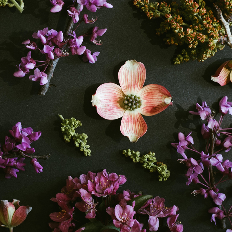 sprigged flower blooms on table