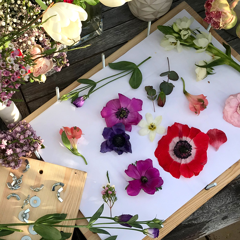 Flower pressing for developing MACREATE print designs